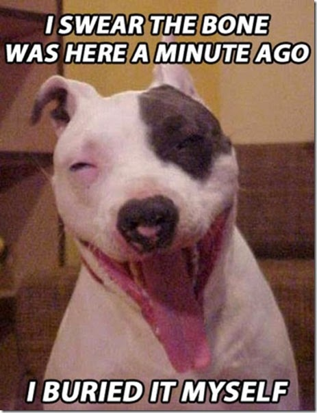 funny-high-dogs-011