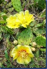 cactus 2011-06-10 005