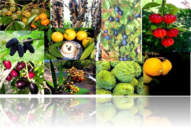 10 Frutas Nativas que curam (1)