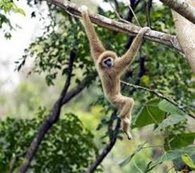 Amazing Pictures of Animals, Photo, Nature, Incredibel, Funny, Zoo, Gibbons, Hylobatidae, Primate, Mammals, Alex (16)