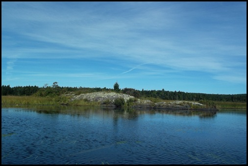 West Shirley Bog 067