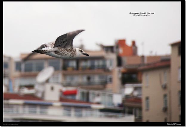 Turkey 84