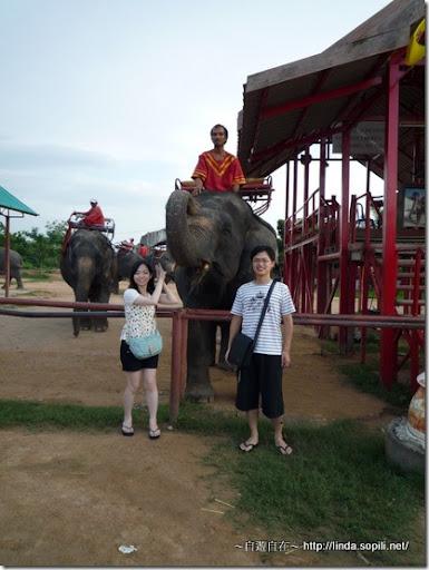 泰國芭達雅-大象合照