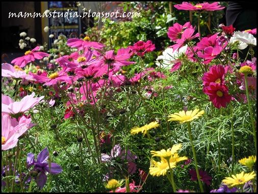 fioridiversi