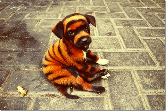 awesome-pet-tiger