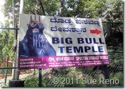 SueReno_Big Bull 1