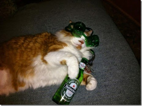 animals-st-paddys-day-010