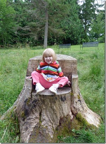 Tree Stump Throne 2