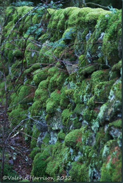 19-mossy-wall