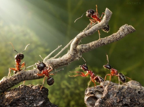 Life-of-Ants-Andrey-Pavlov-09