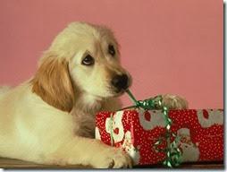 animales navidad (12)