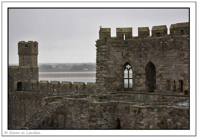 A Lone Seagull at Caernarfon Castle