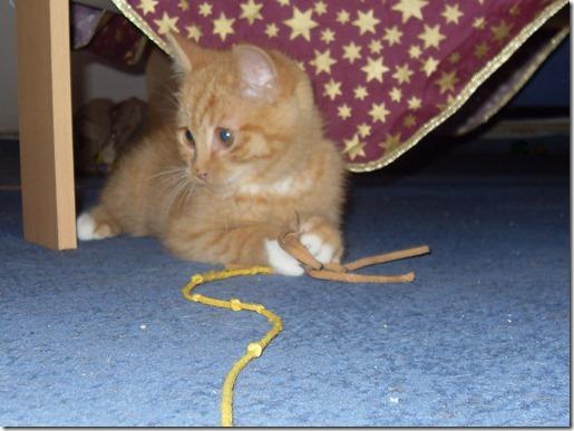 2011_12 Garfield (9)