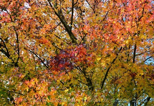 17  Glória Ishizaka - Folhas de Outono 2013