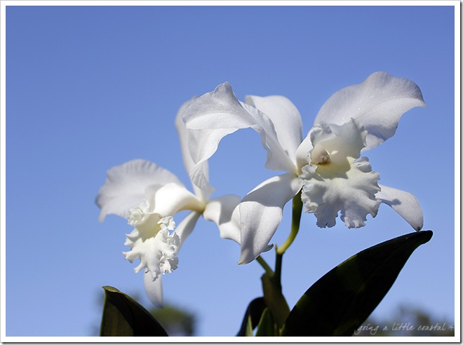 orchid_edited-1