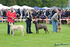 20100513-Bullmastiff-Clubmatch_31033.jpg