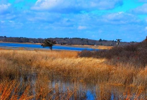 1-27-12 Salisbury Marsh-kab