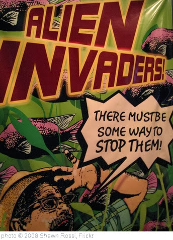 'Alien Invaders' photo (c) 2008, Shawn Rossi - license: http://creativecommons.org/licenses/by/2.0/