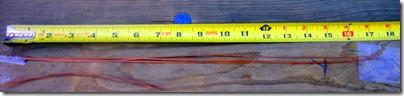 longest-pine-needlse