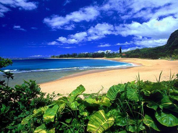 صور هاواي2