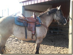 Riata in her new Dakota saddle