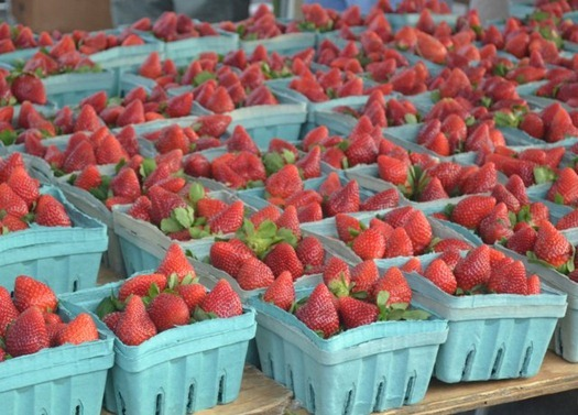 Strawberries - they smelled wonderful!