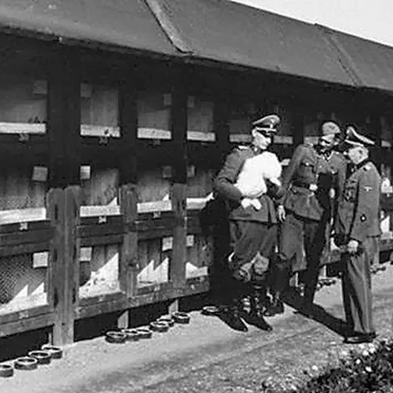 10 OBSCURE AND COMPLETELY DELUSIONAL NAZI SCHEMES
