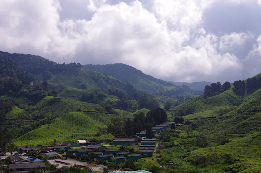 Malaysia's impossibly green Cameron Highlands.
