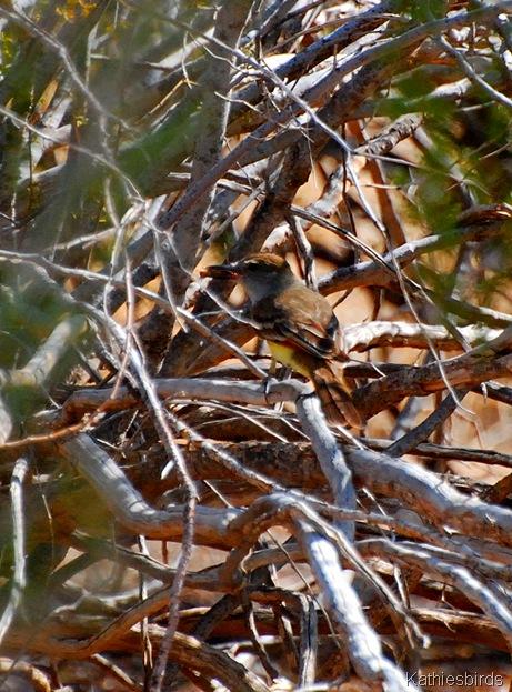 10. ashtroated flycatcher-kab
