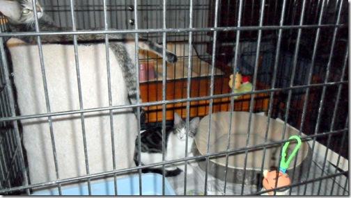 Peebles-sleeping-on-kitty-condo,Precious peeking out from it