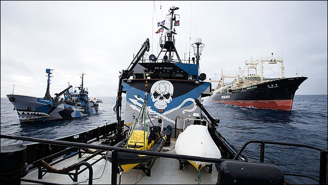 Sea Shepherd ships the Bob Barker and Steve Irwin block fuelling attempts on the whaling fleet's factory vessel, the Nisshin Maru. Photo: Eliza Muirhead / Sea Shepherd Australia