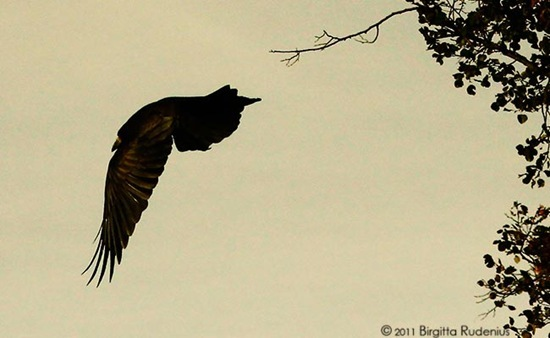 bird_20111013