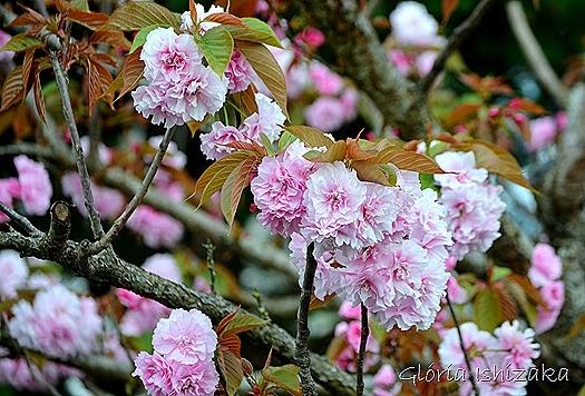 Glória Ishizaka - flor 1