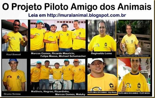 piloto_amigo_animais