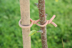 Original Soft-tie Woody Roll - sapling support