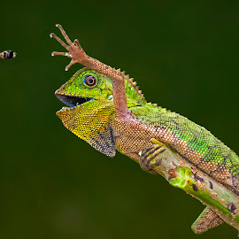 Come Here U Little Creature..!! by Aditya Permana - Animals Reptiles