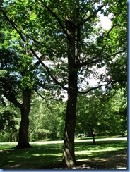 6428 Ottawa 1 Sussex Dr - Rideau Hall - red oak planted by Richard M Nixon