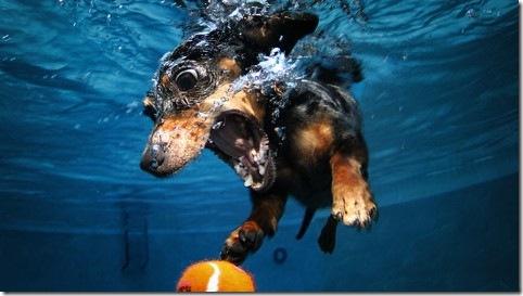 ht_underwater_dog_jp_120216_wblog