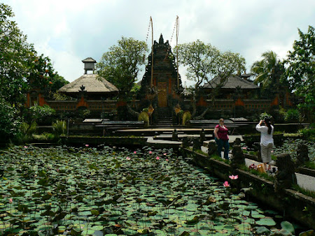 Bali photo: A pond with lilies