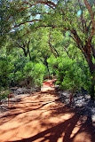 On The Mala Walk...  So Much Green! - Yulara, Australia