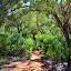 On The Mala Walk...  So Much Green! - Yulara, Australia