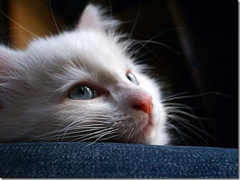 gatto-milionario