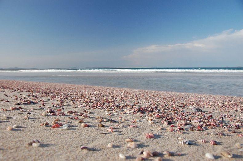 shell-beach-australia-5
