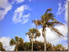 Palm trees (2)