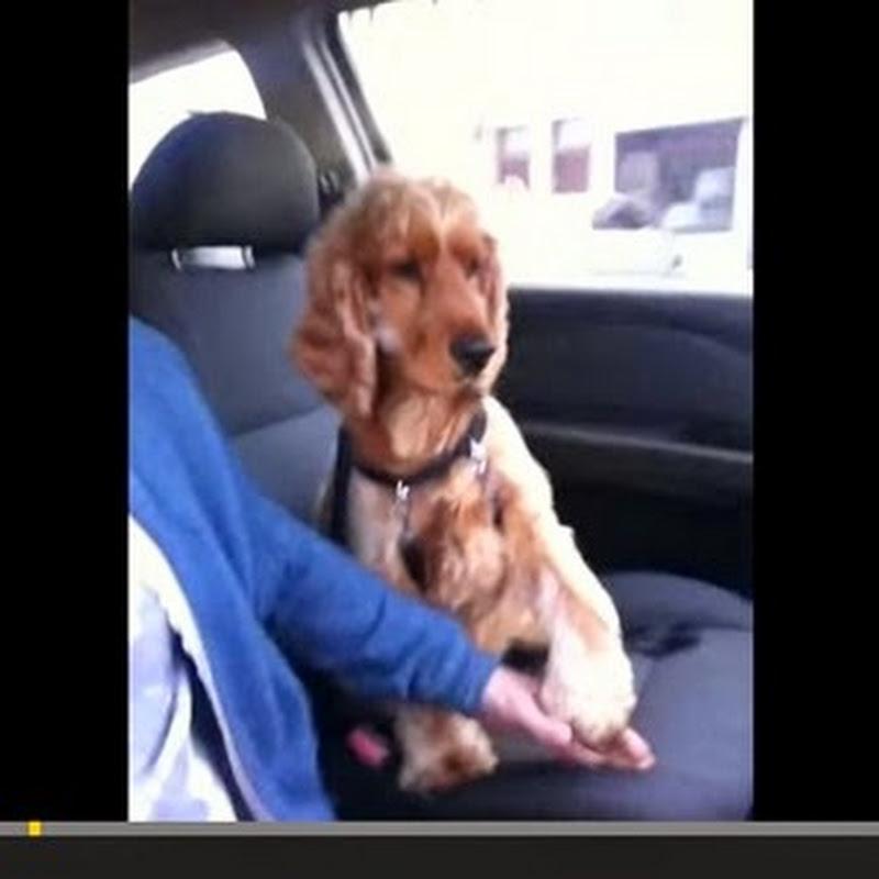 Αξιολάτρευτο σκυλί δεν αφήνει το χέρι  του ιδιοκτήτη του