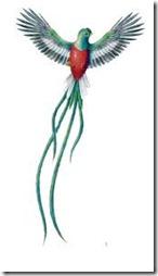 colorear guatemala (6)