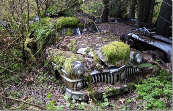 Cemitério de carros na floresta (12)
