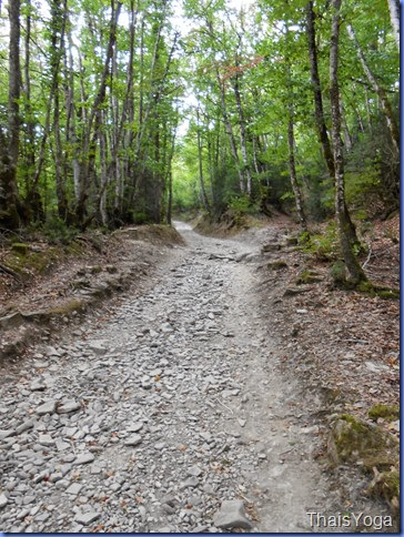 caminho de santiago 333