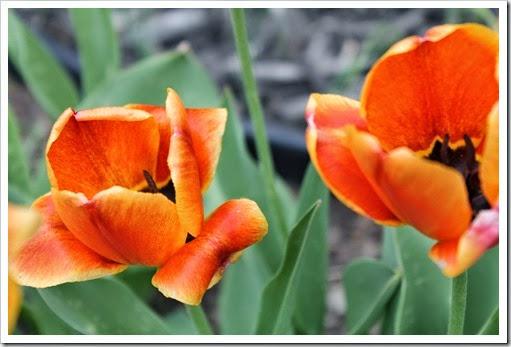 spring 2014 pics 006