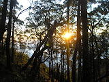 Sunrise on the climb up Gunung Mutis (Daniel Quinn, August 2011)